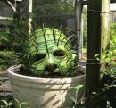 Cactus inedit