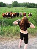 Cum recunosti boii dintr-o turma de vaci