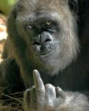 Dovada inteligentei maimutelor
