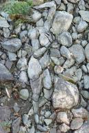 Femeia de piatra