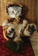 In blana de tigru...