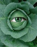 Ochiul magic