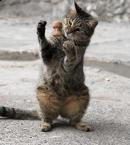 Pisica magician