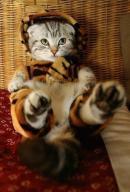 Sunt tigru, nu vedeti?
