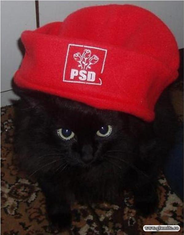 Betty - pisicuta PSD-ista