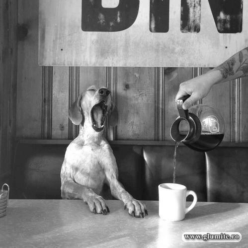 Mai bine mi-ai fi dat o cafea...