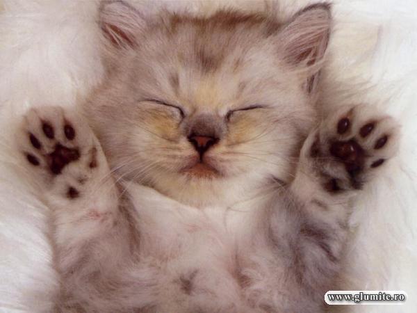 Noapte buna!