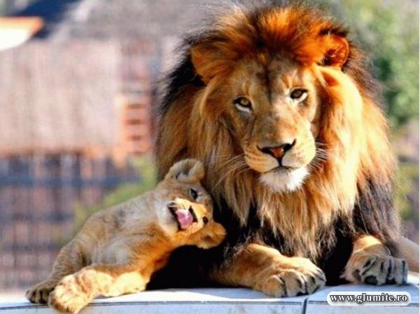 Tata, mergem diseara la circ?